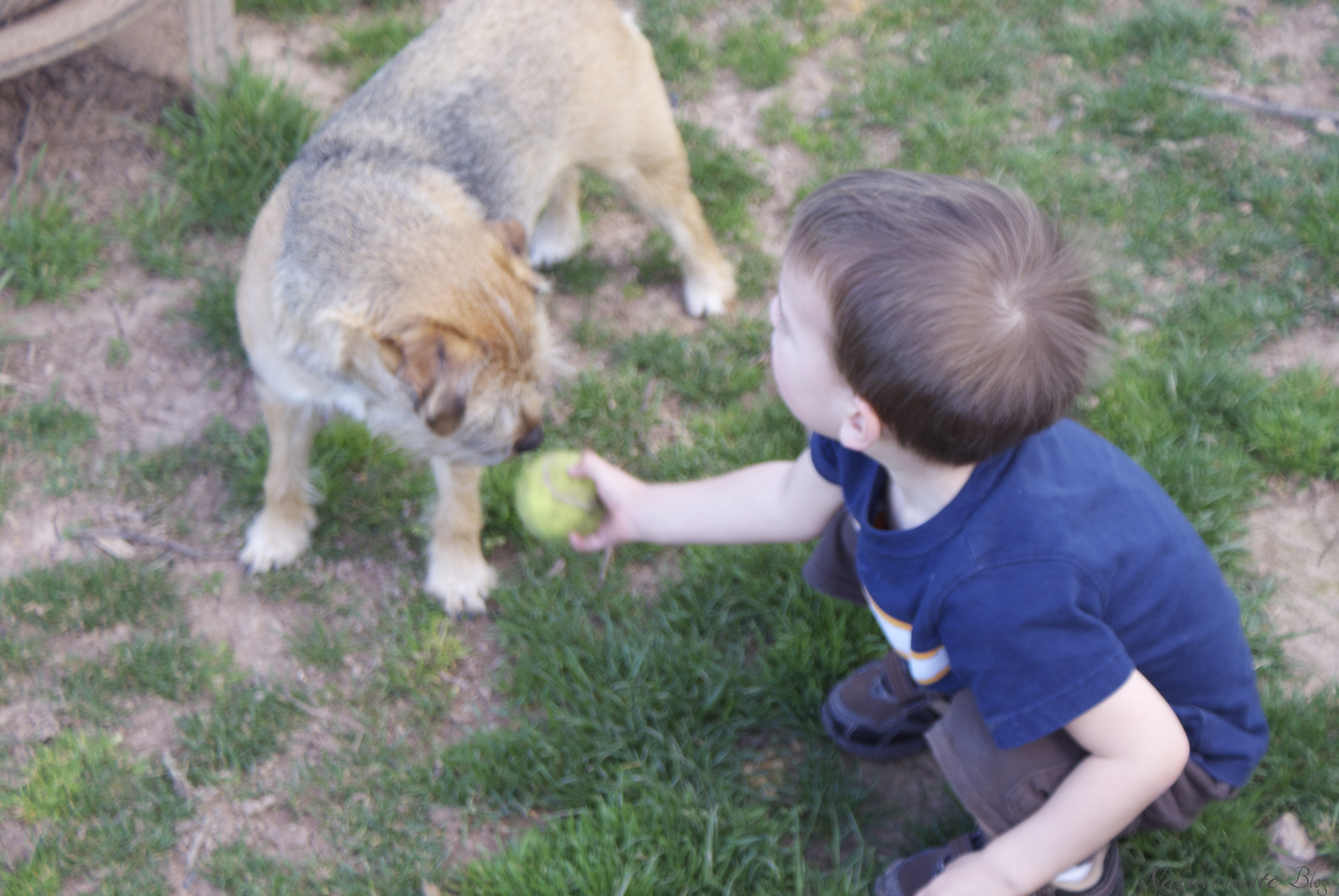Almost Wordless: Little Man's Best Friend and Spring